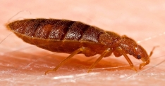 The Bed Bug Problem Interactive Online Training